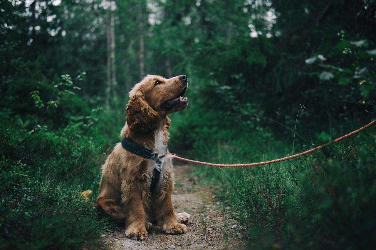 Camping mit Hund im Wald und auf Wanderungen