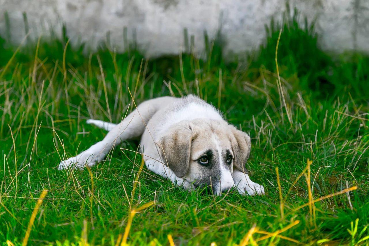 Hund müde oder krank