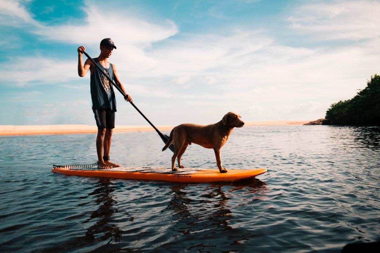 Hundefreundliches Campen Mann mit Hund im Wasser