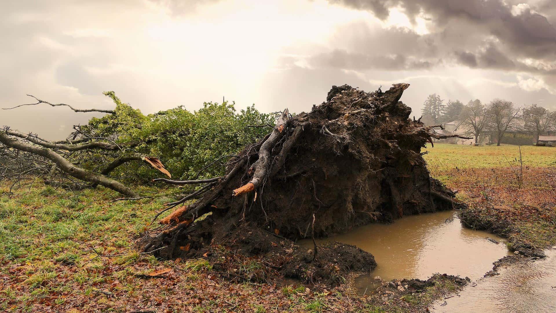 Umgestürzter Baum nach einem Unwetter