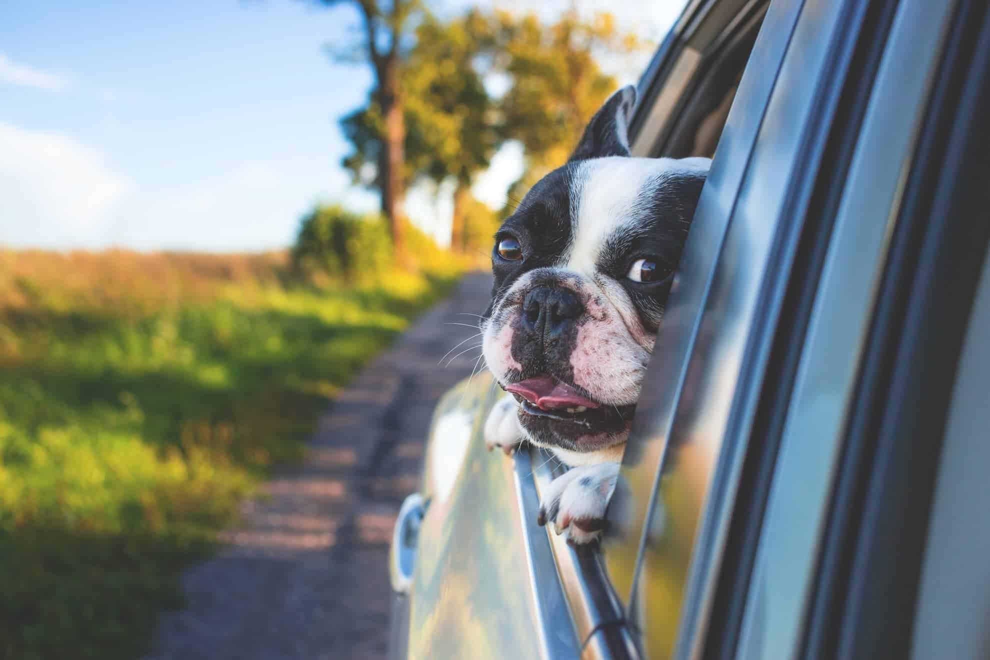 Transport Hunde Auto