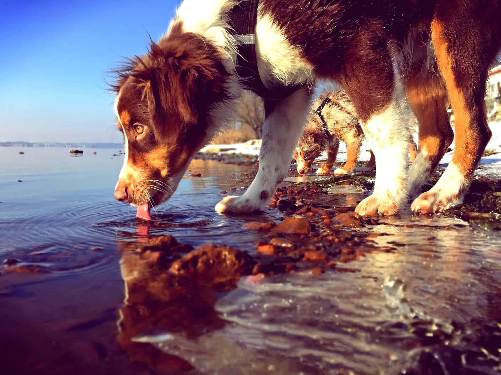 mit hunden am wasser