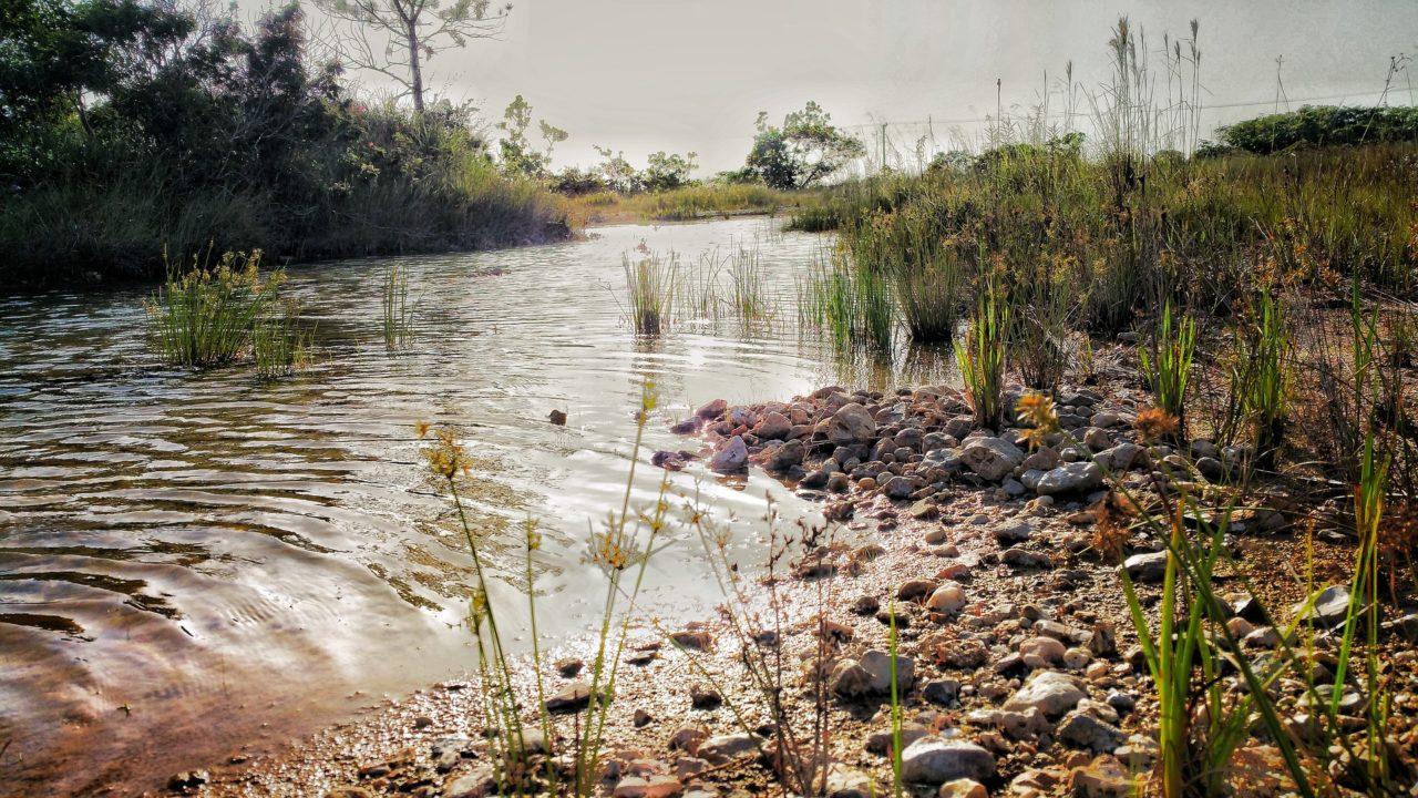 Kieselsteine am Ufer eines Flusses