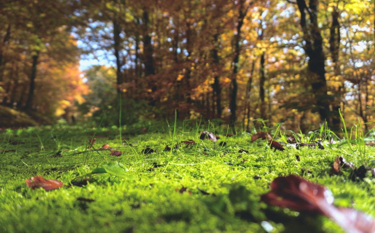 Ein Waldboden mit Moos