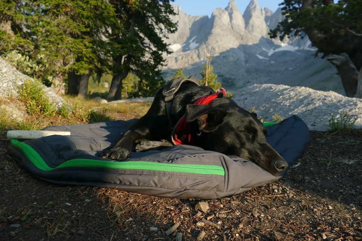 Hund auf Schlafsack beim Camping