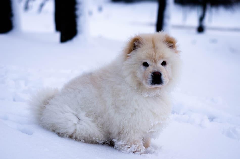 12 wissenswerte Tipps fürs Wintercamping mit Hund 1