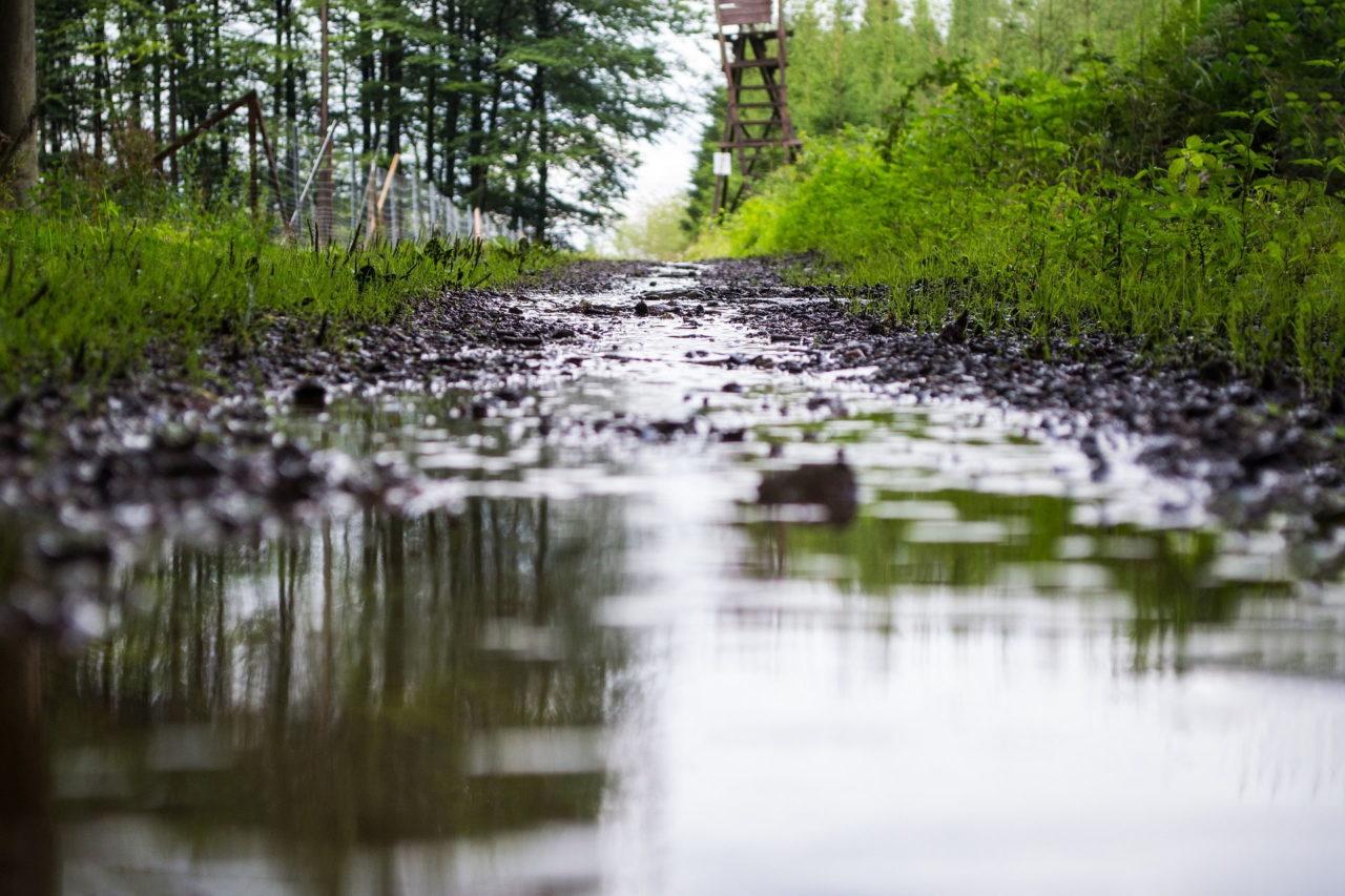 Pfützen auf einem Waldweg nach dem Regen