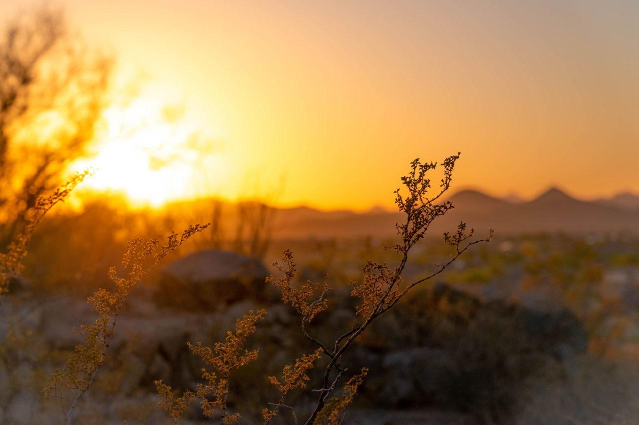 Sonnenuntergang über einer Steppe