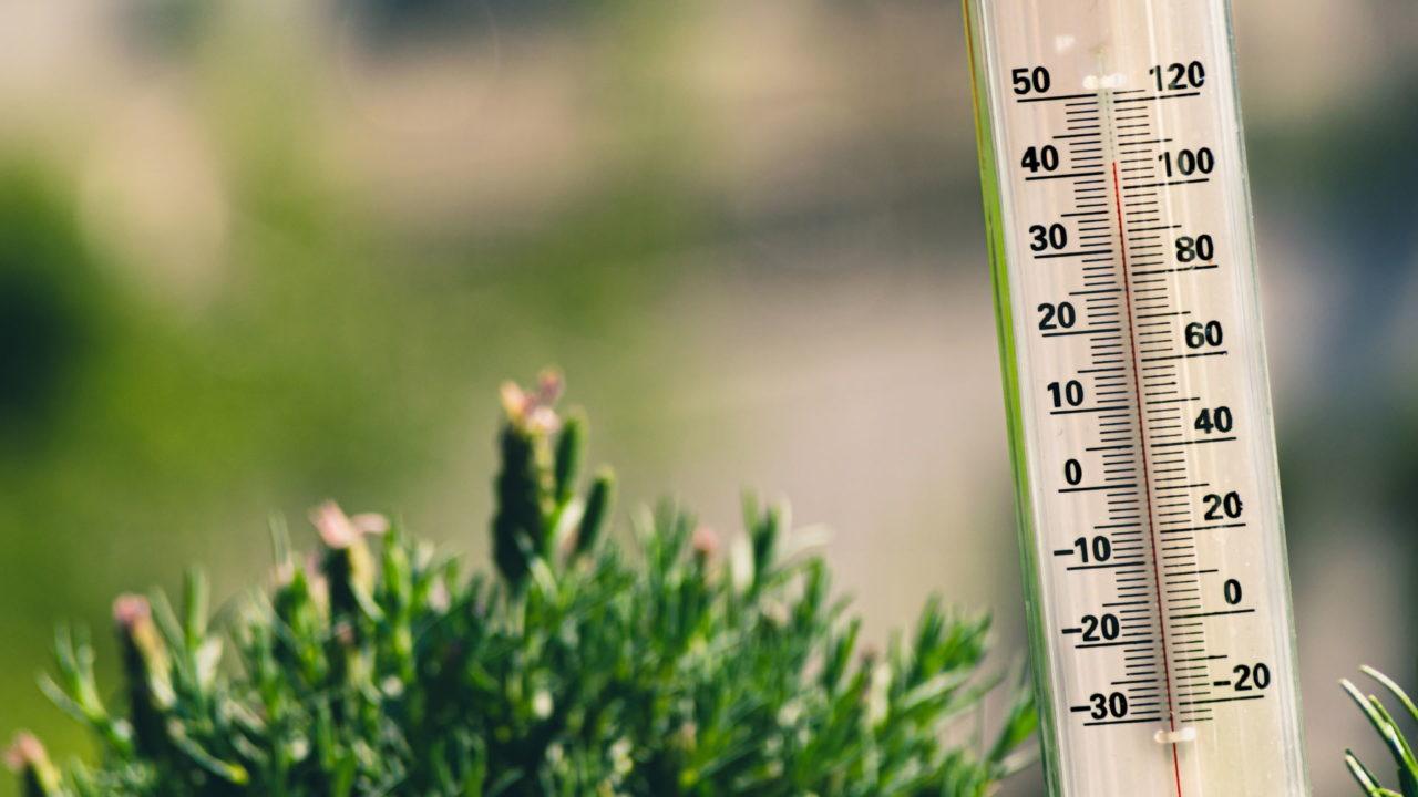 Thermometer auf einer Pflanze in der Sonne