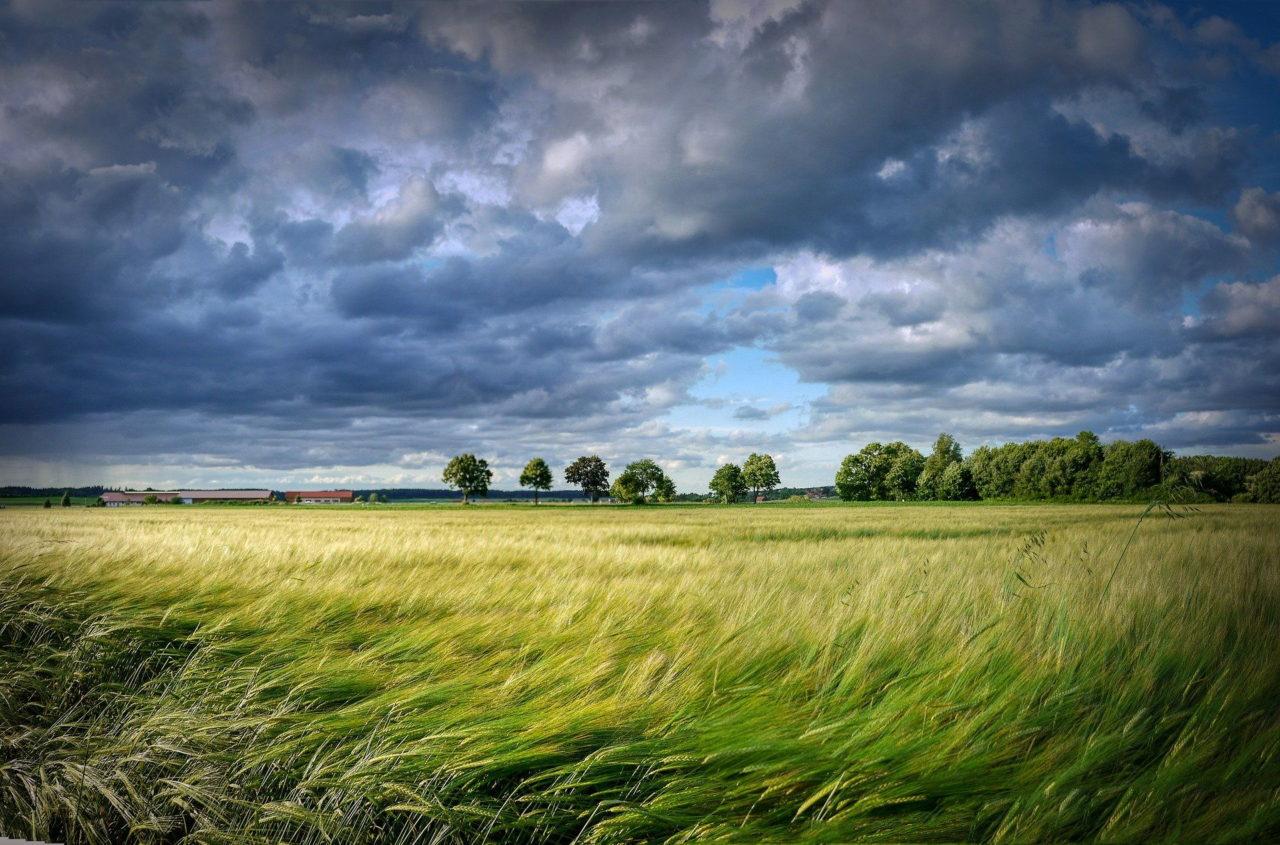 Kräftiger Wind treibt Wolken über ein Kornfeld
