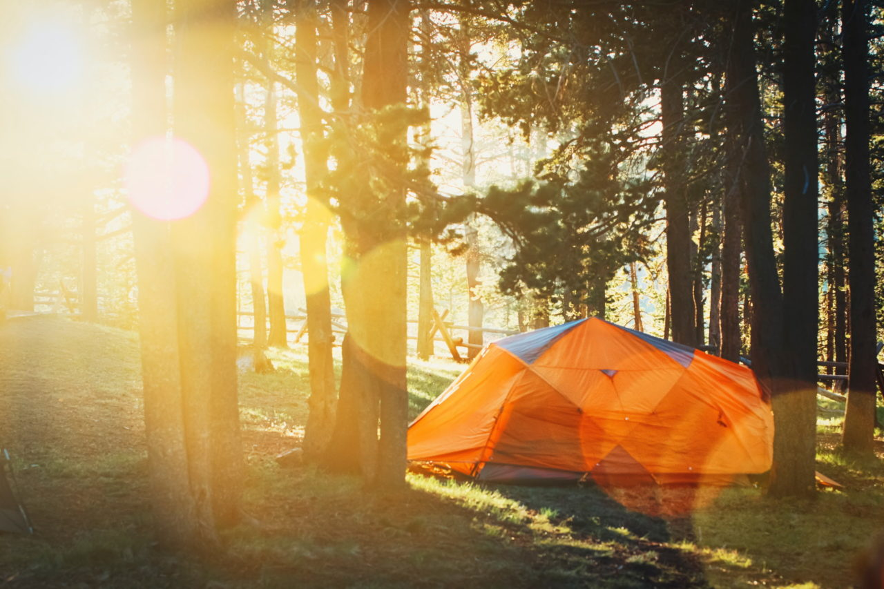 Zelt im Wald bei Sonnenschein