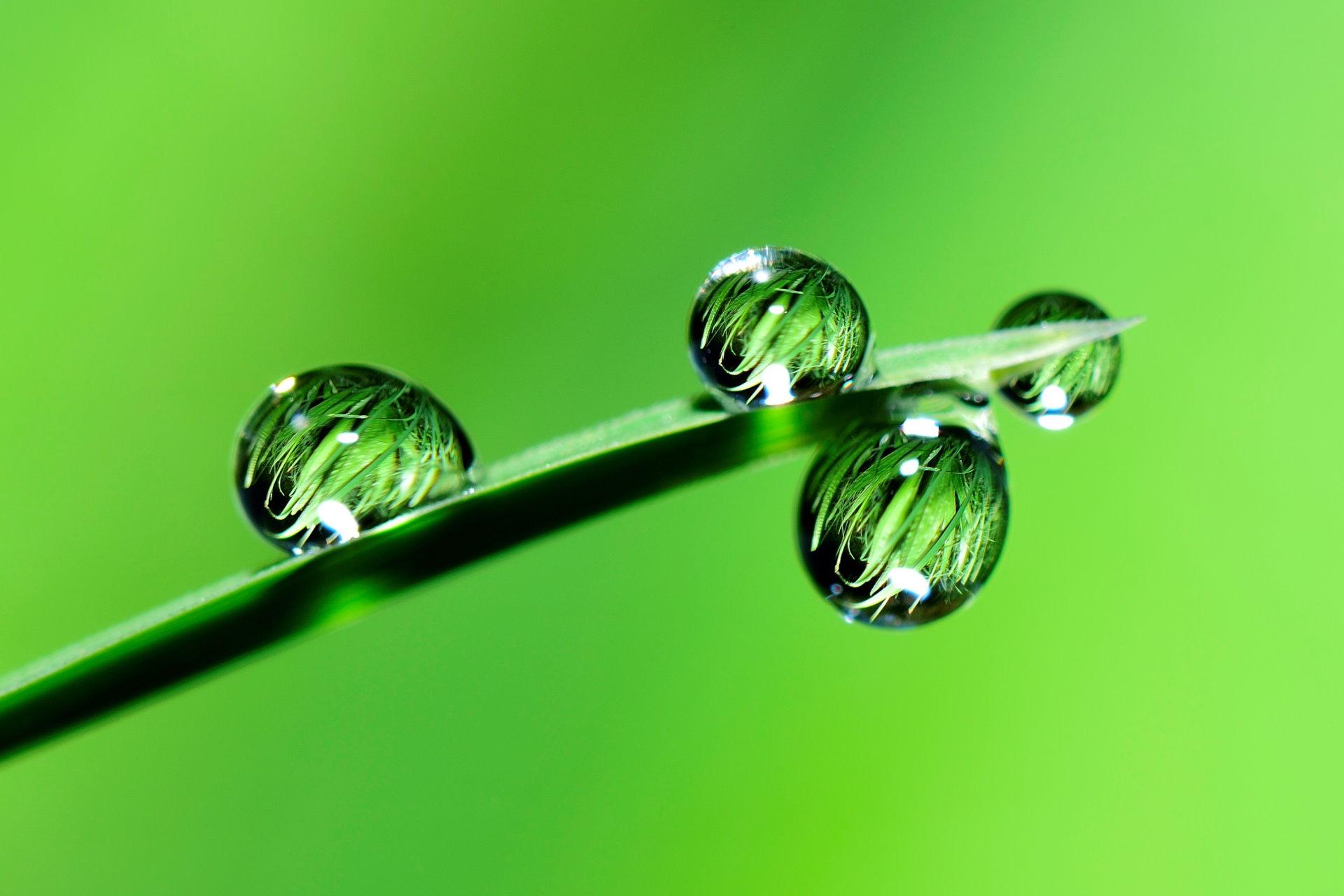 Regentropfen auf einem Grashalm