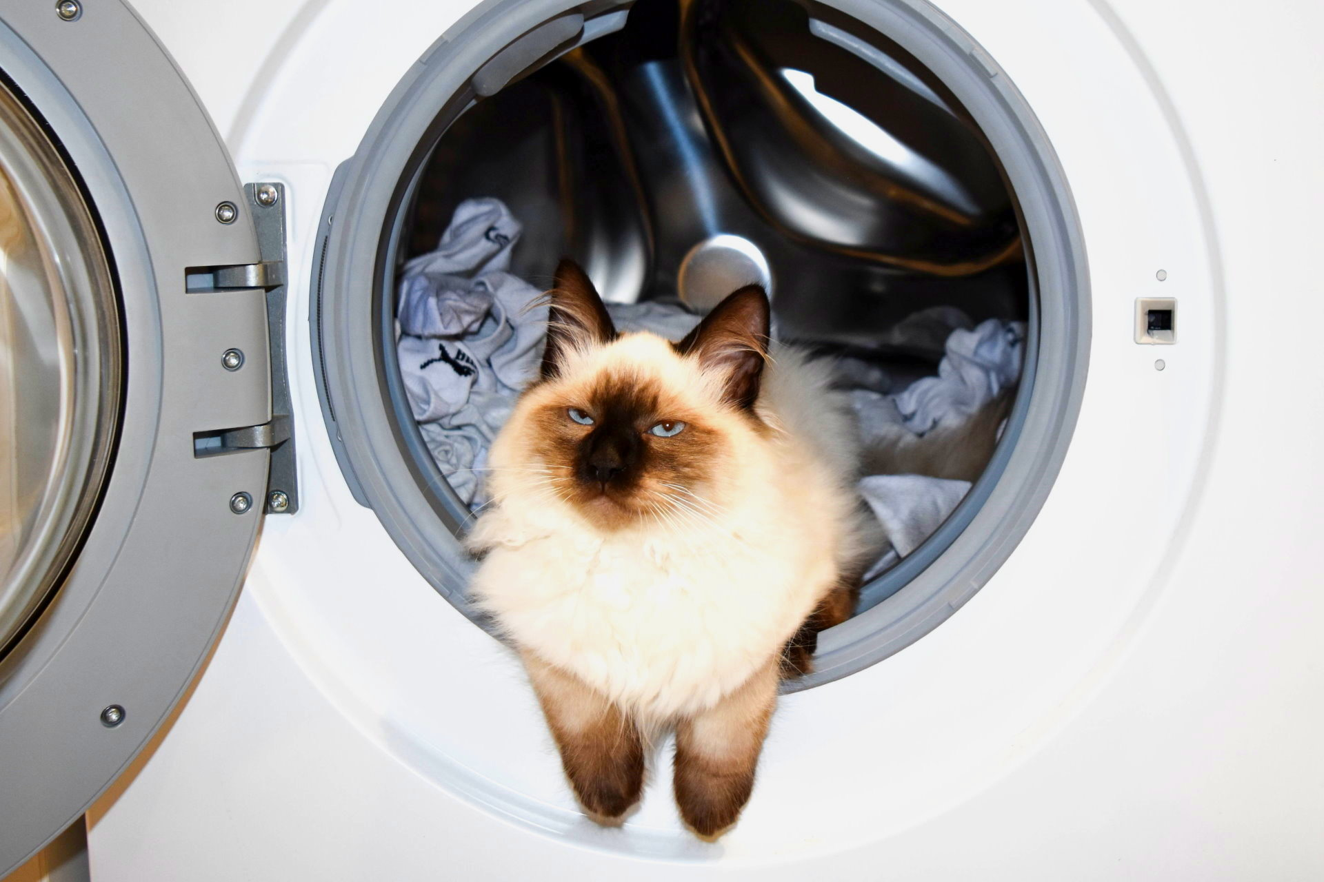 Eine Katze liegt in der Trommel einer Waschmaschine